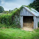 Vine Covered Shed by Keith G. Hawley