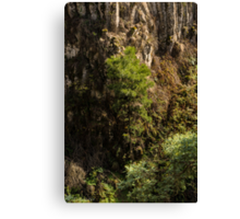 Growing Up At Trentham Falls Canvas Print