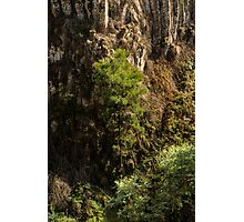 Growing Up At Trentham Falls Photographic Print
