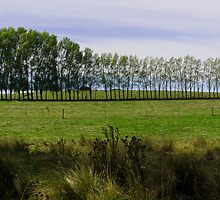 One Treeline Two Cows by Guyzimijz