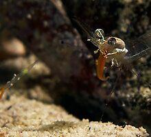 Tongue Shrimp MKII :P by James Deverich