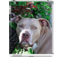 Portrait of a Pit Bull iPad Case/Skin