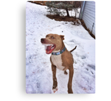 Murphy the Snow Eater Canvas Print
