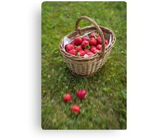 Basket of Strawberries Canvas Print