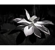 True Colors Photographic Print