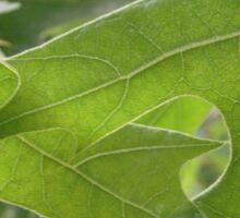 Intertwining Leaves Sticker