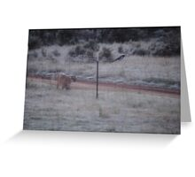 Mountain lion front yard Greeting Card