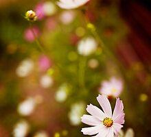 Flowers by VaidaAbdul