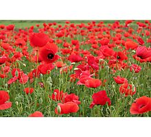red poppy flowers Photographic Print