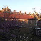 Twilight on the High Line, New York City's Elevated Garden and Park  by lenspiro