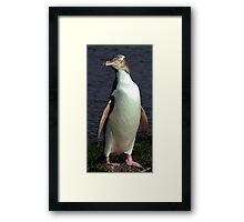 Yellow Eyed Penguin Bird Portrait Framed Print