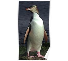 Yellow Eyed Penguin Bird Portrait Poster