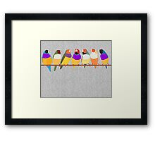 Lady Gouldian Finches Framed Print