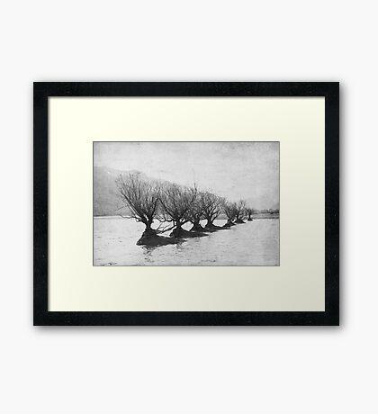 Willow Trees Framed Print