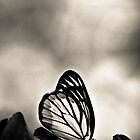 Madam Butterfly dressed in BW by Kornrawiee