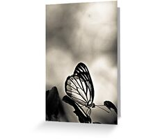 Madam Butterfly dressed in BW Greeting Card