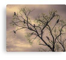 Barren Kookaburras Canvas Print