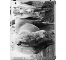 Icelandic Horse II iPad Case/Skin