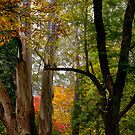 Autumn in Mt Wilson NSW by Ian English