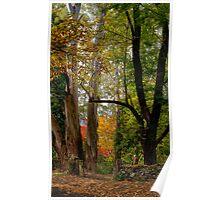 Autumn in Mt Wilson NSW Poster