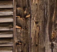 Weathered Wooden Abstracts - 3 by Georgia Mizuleva