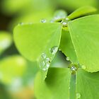 Drops of Luck by primovista