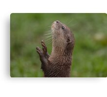 Otter reaching for food Canvas Print