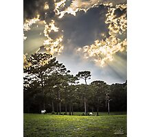 Horses Under the Sky Photographic Print