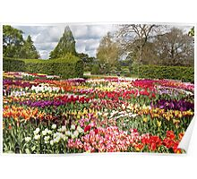 The Wonder of Wisley Poster