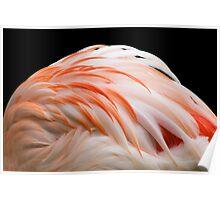 Flamingo Evening Wear........ Poster