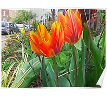 City Tulips Poster