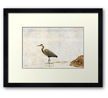 heron the call of the sea... Framed Print
