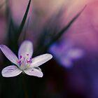 Spring Beauty by EkaterinaLa