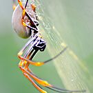 Spider up close 2 by Alison Hill
