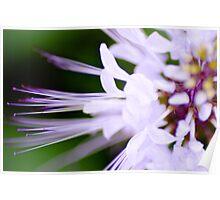 Soft Petals 2 Poster