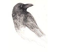 Raven Study Photographic Print