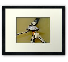 Yoga Turtle  Framed Print