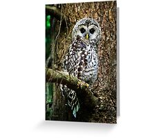 Cute Owl Greeting Card