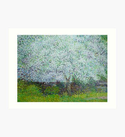 Blossoming apple tree Art Print