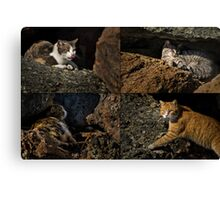 Feral cats of Rainbow Harbor Canvas Print