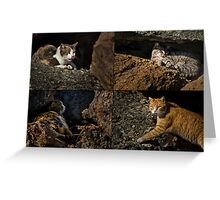 Feral cats of Rainbow Harbor Greeting Card
