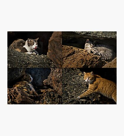 Feral cats of Rainbow Harbor Photographic Print