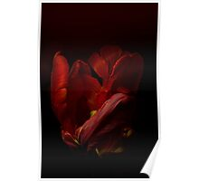 The Red Tulip Poster