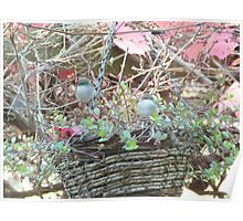 Autumn Leaves & Fairy Wrens! back patio 'Arilka' Mt. Pleasant. S.A. Poster