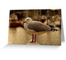 Seaguls  Greeting Card