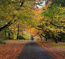 Queens Avenue - Mt Wilson by Ian English