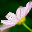 Petals by KellyHeaton