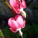 Spring heart by Ana Belaj