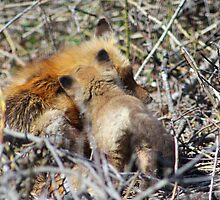 Vixen and Pup Snuggle by Gilda Axelrod