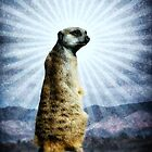 Meerkat Enlightenment by Thomas Gehrke
